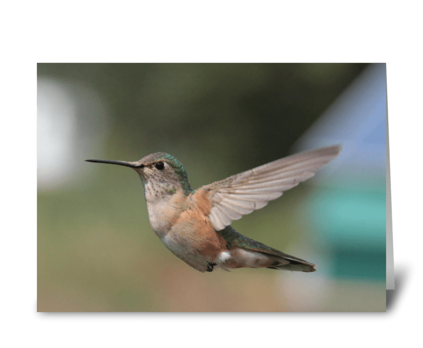 Hummingbirds are cool send this greeting card designed by aitcheye hummingbirds are cool greeting card m4hsunfo