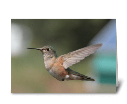 Hummingbirds Are Cool greeting card