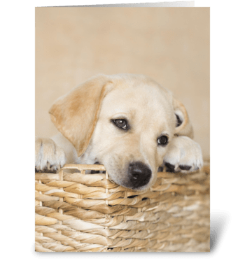 Lab Puppy Natural Any Occasion greeting card