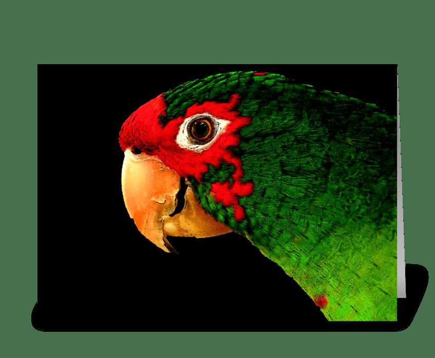 Talk Like a Parrot greeting card