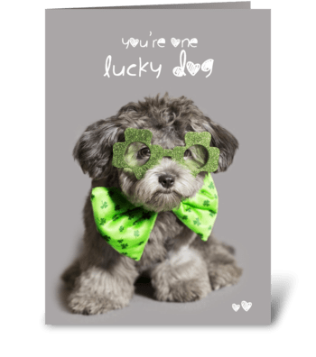 St. Patrick's Day Lucky Dog  greeting card