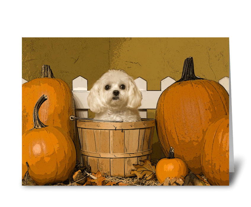 Fall Holiday & Cute Dogs greeting card