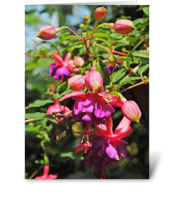 Fuchsia Blooms greeting card