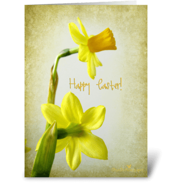 Daffodils with texture greeting card
