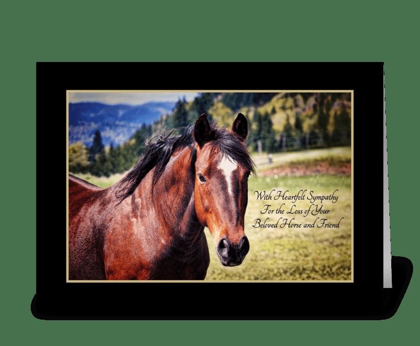 Pet Sympathy Loss of Horse Beautiful Bay greeting card