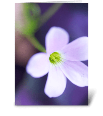Glow Flower greeting card