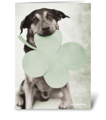 St. Patrick's Day! greeting card