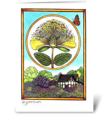 Hypericum greeting card