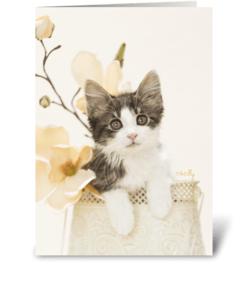 Kitten in Bloom greeting card