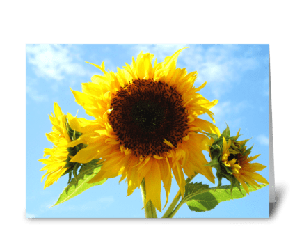 Cheerful Sunflowers greeting card