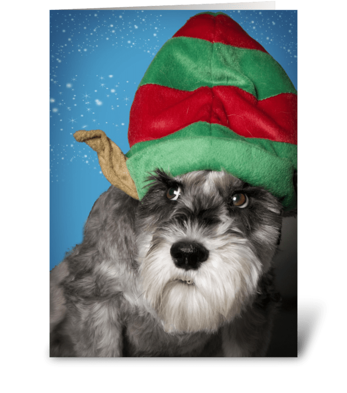 Unhappy Dog During Holidays greeting card