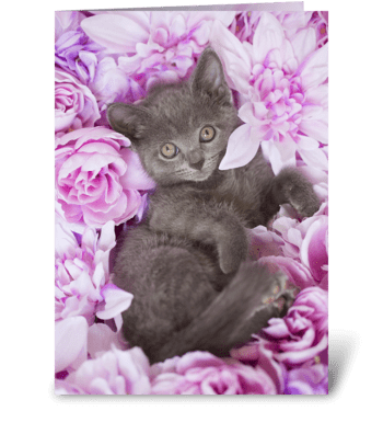 Purple Floral Gray Kitty greeting card