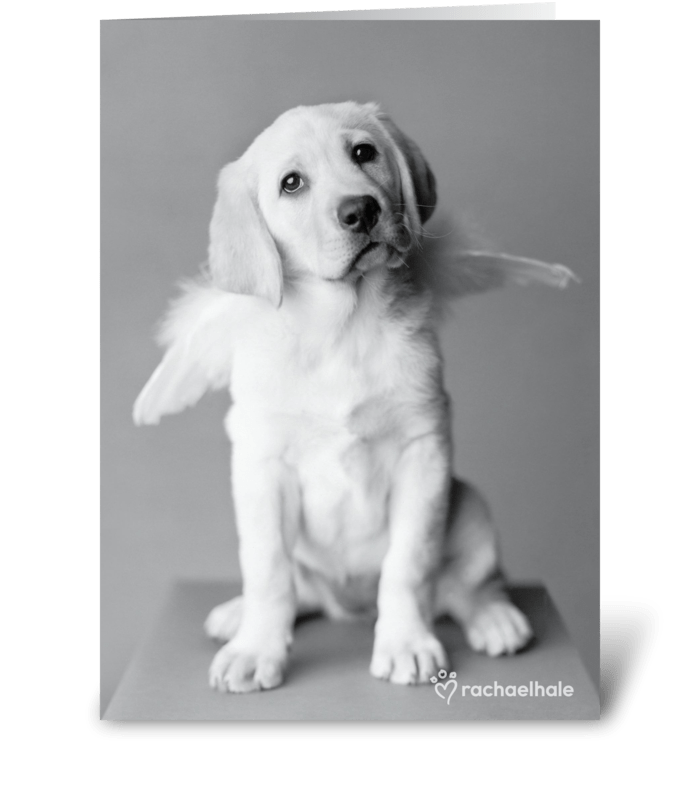 With Sympathy Puppy greeting card
