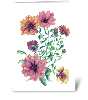 Cape daisy blossoms greeting card