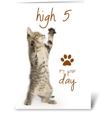 High Five Kitten's Special Day greeting card