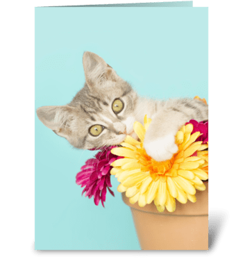 Silly kitten in Flower Pot greeting card