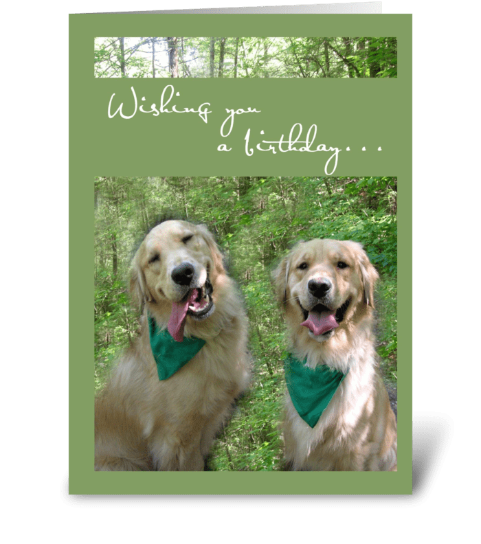 Golden retrievers birthday send this greeting card designed by golden retrievers birthday greeting card m4hsunfo