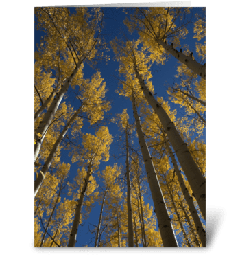 Tall Color greeting card