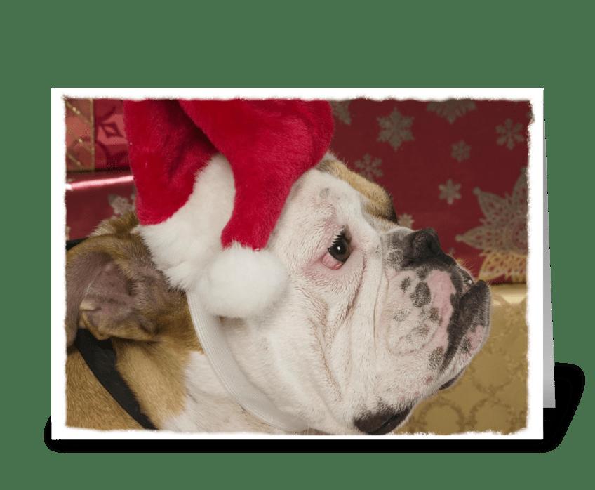English Bulldog Not Merry greeting card