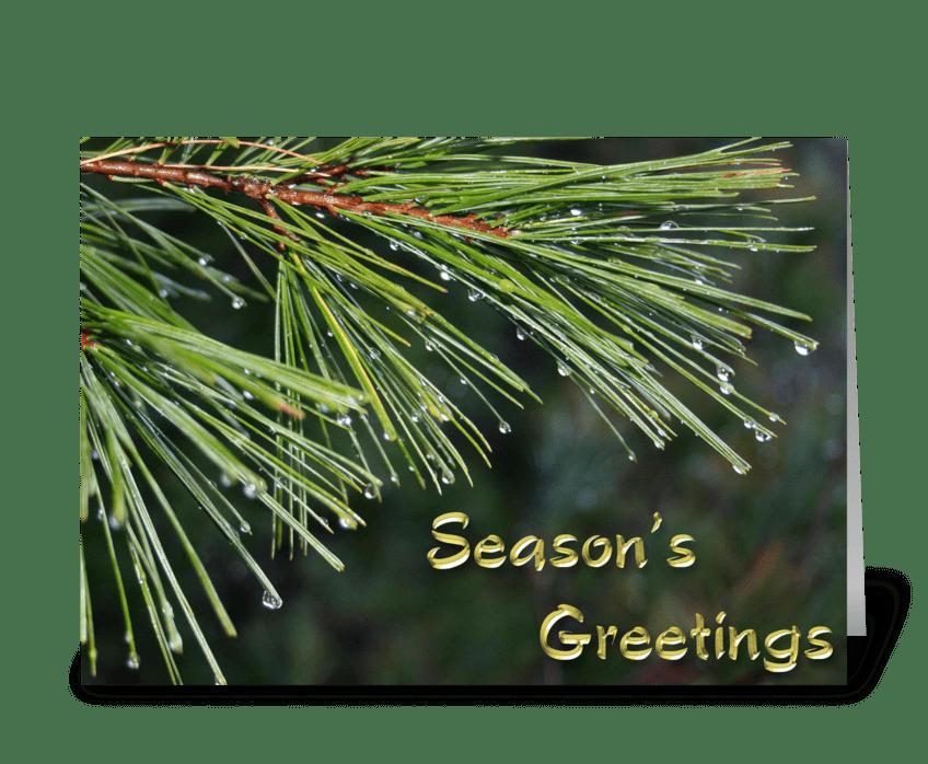 Evergreen, Dew Drops, Season's Greetings greeting card