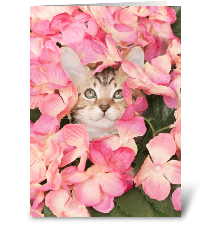 Kitten Peeking from Pink Blossoms greeting card