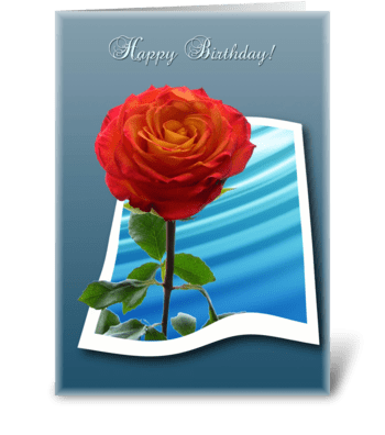 Rose for Birthday greeting card