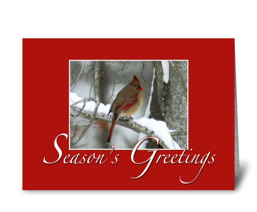 Redbird Season's Greetings greeting card