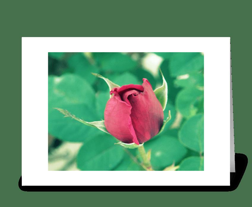 Elegant Red Rose  greeting card