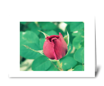 Elegant Red Rose  greeting card
