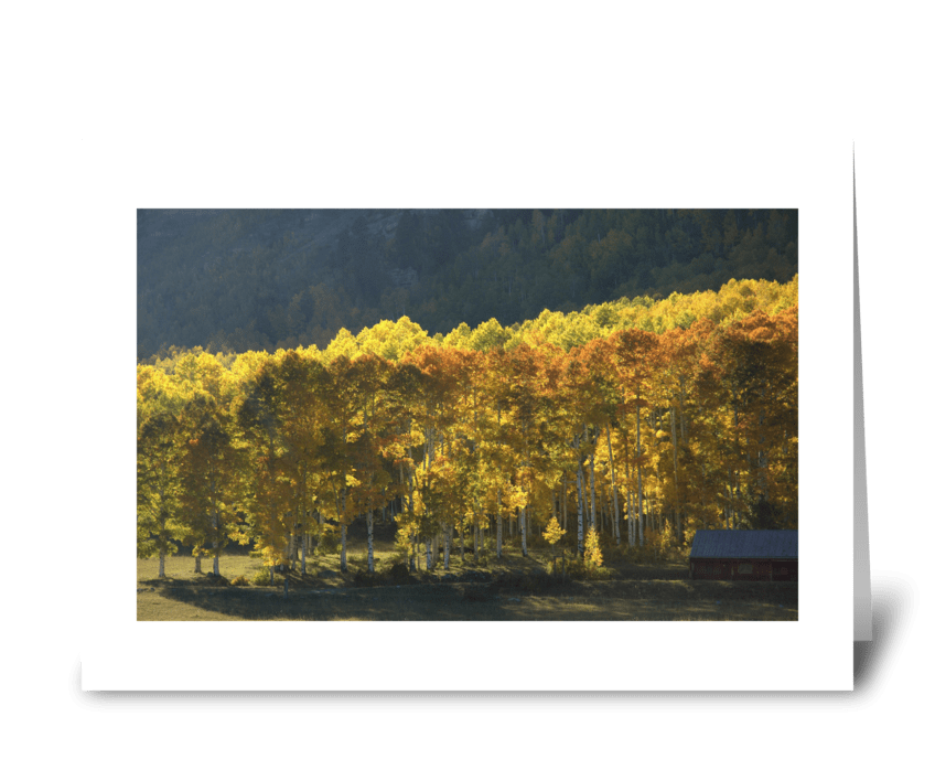 Colorado Gold greeting card