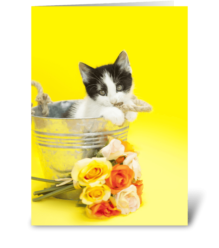 Brighten Your Mother's Day Kitten greeting card