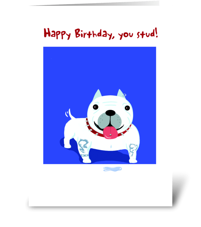 Bull Dog Stud Birthday greeting card
