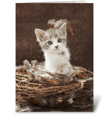 Just Nesting... Expecting Baby Kitten greeting card