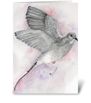Gray Dove greeting card