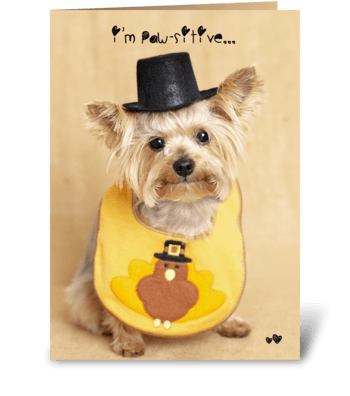 Thanksgiving Puppy greeting card
