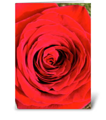 Full Rose -photograph greeting card