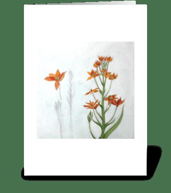 orange star greeting card