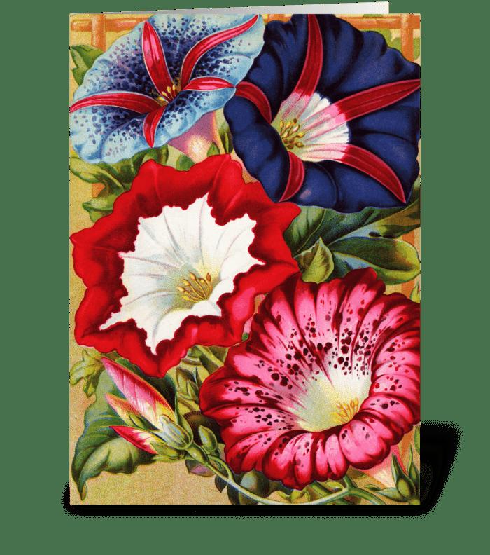 Morning Glories greeting card