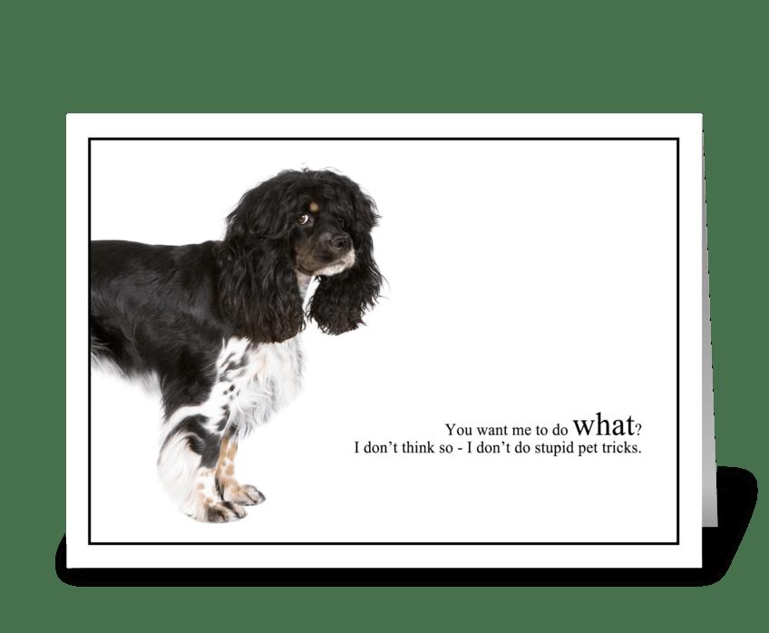 Stupid Pet Tricks greeting card