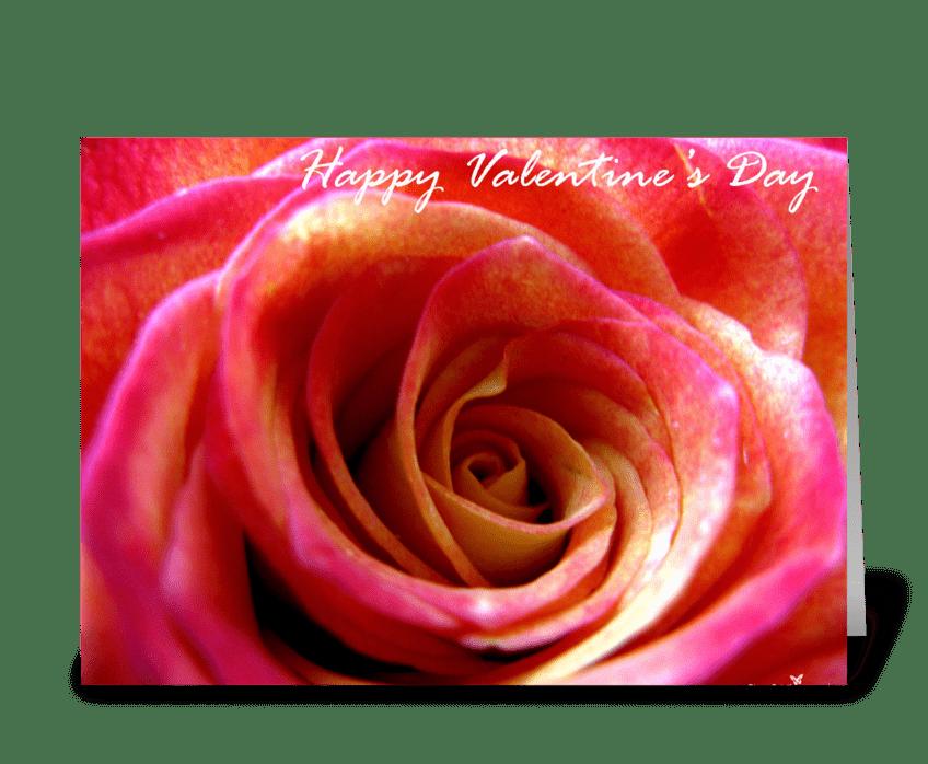 Total rose greeting card