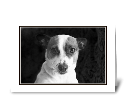 A Stare from Frazy greeting card