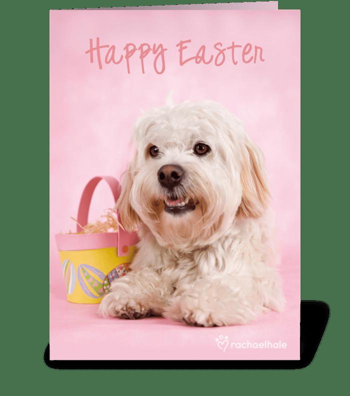 Easter Egg Game! greeting card