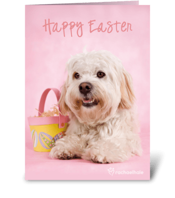Easter Egg Game! greeting card