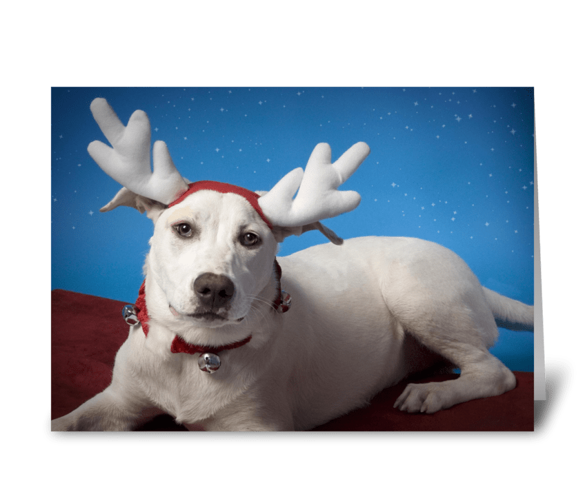 Irritated Dog with Reindeer Ears greeting card