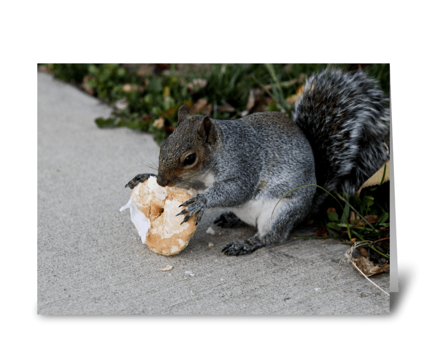 Squirrel Eating Donut greeting card