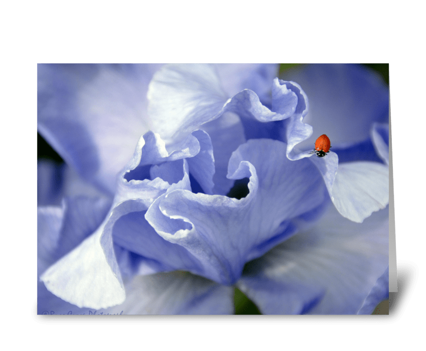 Lady Iris greeting card