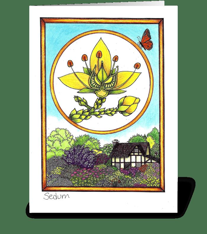 Sedum greeting card