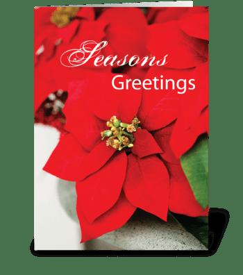 Christmas Poinsettias, Business greeting card