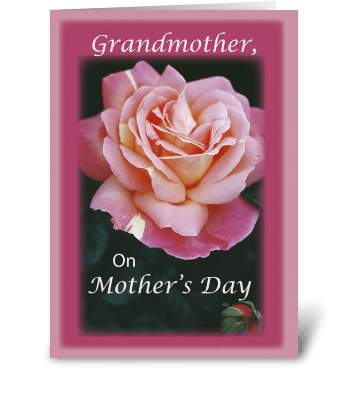 Grandmother, Mother's Day Rose, Pink greeting card