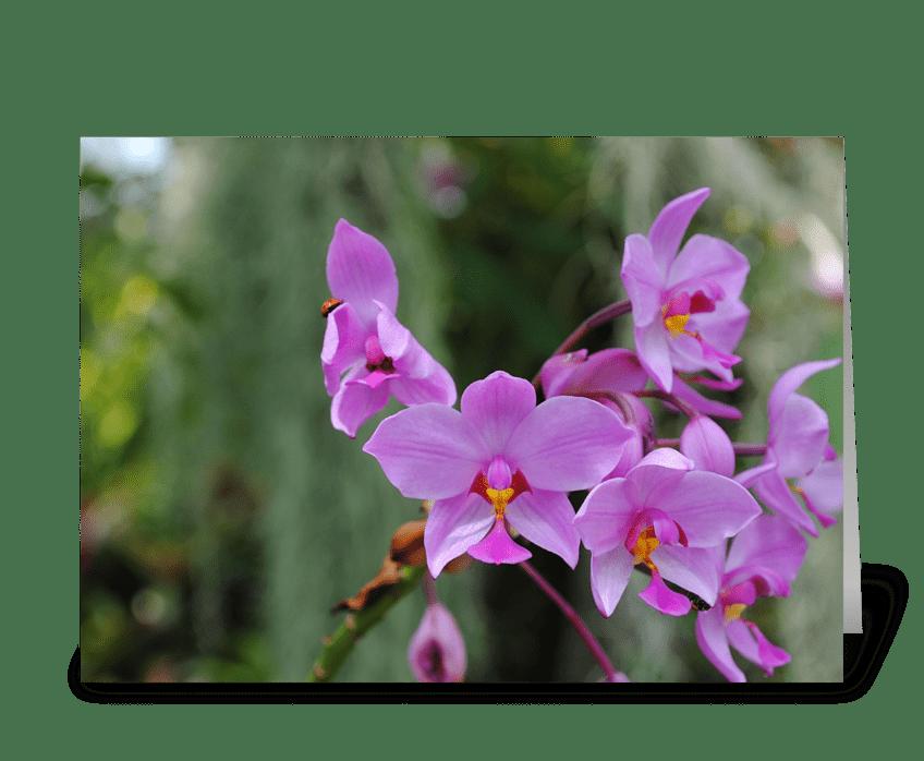 Springtime Beauty greeting card